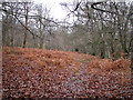 TM1239 : Winter colours in Old Hall Wood, Belstead by Evelyn Simak