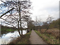 SJ6469 : Trees alongside the Weaver by Stephen Craven