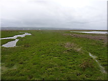 SJ2774 : Another view of Burton Marsh by Peter Aikman