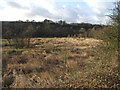 SD7113 : Scrub land at Dunscar by Philip Platt