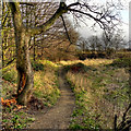 SJ8393 : Hough End Clough by David Dixon