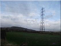 SD7813 : Field, pylon and crows by Philip Platt