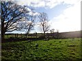 NS8076 : Castlecary Muir, Rashbush (ruin) by Robert Murray