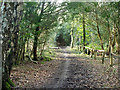 TQ4065 : Bridle path on Hayes Common by Robin Webster