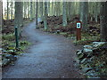 NJ8504 : Footpath in Rotten o'Gairn Wood by Ewen Rennie