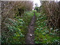 SD6078 : Snowdrop lined footpath entering Low Biggins by John Darch