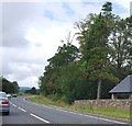 NS3684 : Woodland by the A82 by N Chadwick
