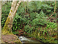J3583 : The Three Mile Water, Whiteabbey (3) by Albert Bridge