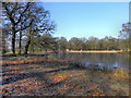 SJ7387 : Island Pool, Dunham Park by David Dixon