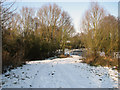 TM0942 : Track to frozen pond near Hintlesham by Evelyn Simak