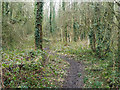 TQ4366 : Small woodland path by Robin Webster