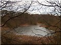 SK4781 : Woodall Pond in February by Neil Theasby