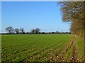 SP9200 : Farmland, Hyde Heath, Little Missenden by Andrew Smith