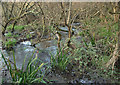 SS8577 : Stream by Burrows Well, Merthyr Mawr Warren by eswales