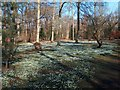 SK6185 : Snowdrops drifting at Hodsock by Neil Theasby