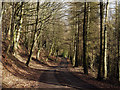 NZ0824 : Forest road above Arn Gill : Week 9
