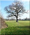 SU9883 : Path through Sefton Park by Graham Horn