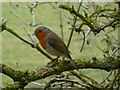 SK3974 : Robin on the Cuckoo Way by Graham Hogg
