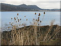 NT2084 : Hawkcraig and teasels by M J Richardson