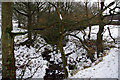 SD9926 : Stubb Clough in the snow by Phil Champion