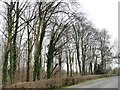 SE4429 : Winter trees exposing their ivy by Christine Johnstone
