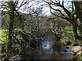 SX0873 : The De Lank River from a bridge on the Camel Trail by David Smith