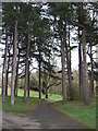 SJ3787 : Path in Sefton Park by JThomas