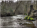 SJ8383 : River Bollin, Styal Country Park by David Dixon