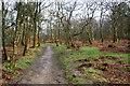 SD6528 : Path in Billinge Wood by Bill Boaden