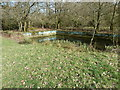 SU9037 : Woodland swimming pool on the edge of Begley Copse by Dave Spicer