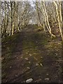 NY7765 : Former waggonway near Barcombe Colliery by Andrew Curtis