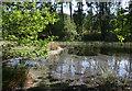 SJ5370 : Black Lake, Delamere: open water by Espresso Addict
