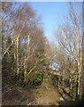SS8676 : Path in birch woodland, Merthyr Mawr Warren by eswales