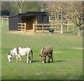 SU9393 : Donkey pasture by Fagnall Lane by Stefan Czapski