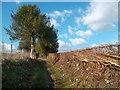 SU6785 : New Hedging down English Lane by Des Blenkinsopp