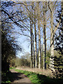 SO7394 : Bridleway north-east of Bridgnorth, Shropshire by Roger  Kidd