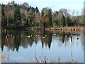 SO8081 : Bodenham Arboretum - view of lake by John Davies