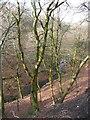 SE0320 : Severhills Clough, Soyland by Humphrey Bolton