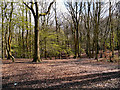 SD8204 : Woodland at Heaton Park by David Dixon