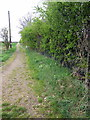 TL1740 : Path by the sewage works by Philip Jeffrey