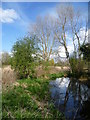 TQ2568 : Branch of the River Wandle in Morden Hall Park by Ian Yarham