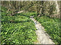 SY9477 : Path through wild garlic by Philip Halling