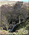NT9220 : Harthope Linn below Hedgehope Hill by Andrew Curtis