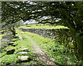 SX2670 : Grasmere Lane - overhanging tree by Rob Farrow