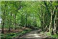 TQ5516 : Dern Lane in Great Dern Wood : Week 16
