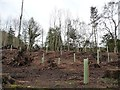 NZ1557 : Renewing the woodland south of the Derwent Walk by Christine Johnstone