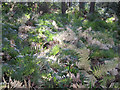 SP1464 : Ferns in autumn, May's Wood by Robin Stott