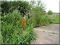 SJ8156 : Church Lawton Locks No 47, Cheshire by Roger  Kidd