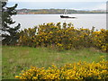NT1579 : Gorse at Dalmeny by M J Richardson