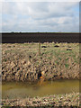 TL6590 : Field drain, Feltwell Anchor by Hugh Venables